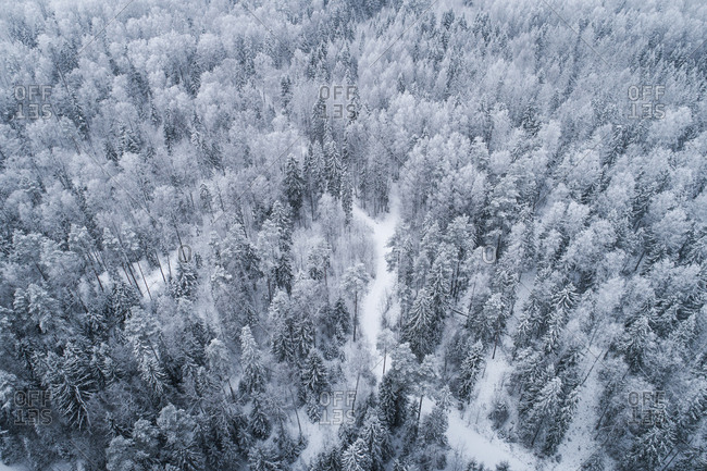 Snowy forest landscape in Estonian winter.