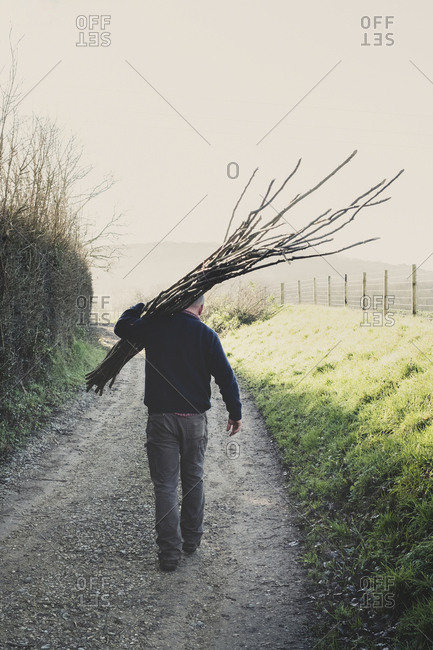 Rear view of man walking down rural path, carrying bunch of wooden pleachers used in traditional hedge building.