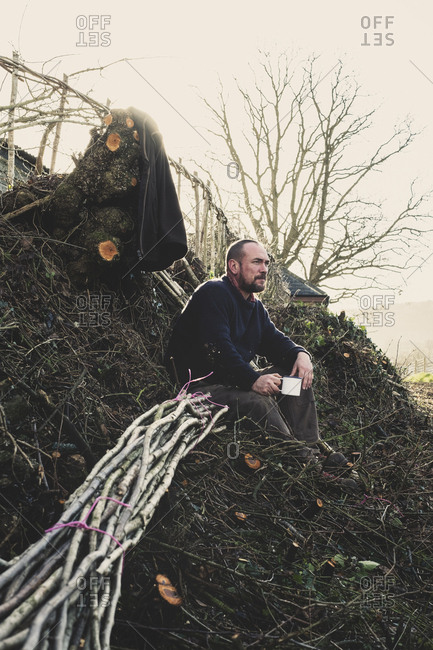 Bearded man sitting on ground next to bunch of wooden pleachers used in traditional hedge building.