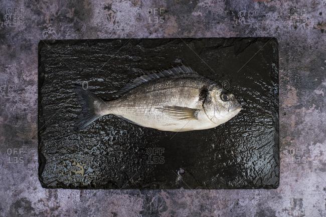 High angle close up of a fresh sea bream on black slate.