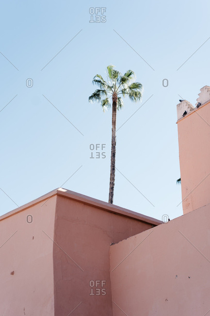 Minimal palm in Marrakech, Morocco