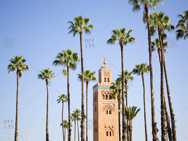 Koutoubia mosque surrounded by palm trees in morning light