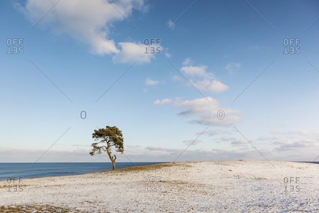 Lone tree in frozen field