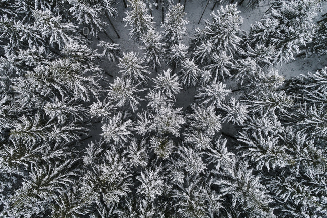 Frozen trees seen from above