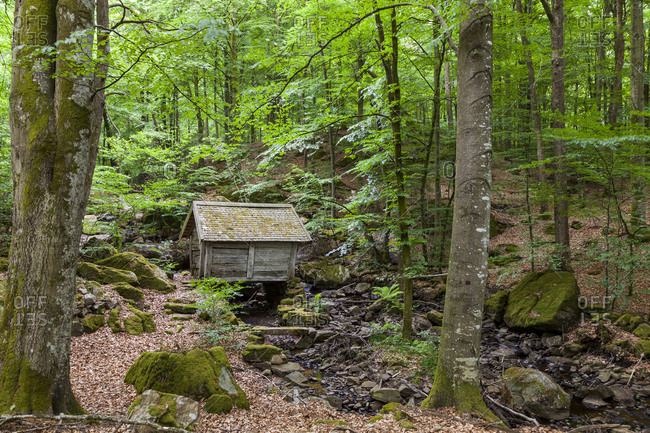 Wooden shed in forest
