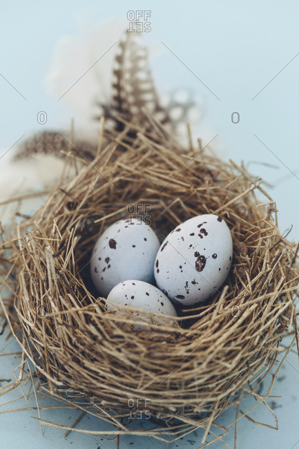 Spotted eggs in birds nest