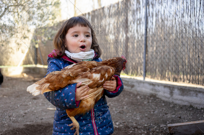 Portrait of amazed toddler girl holding chicken