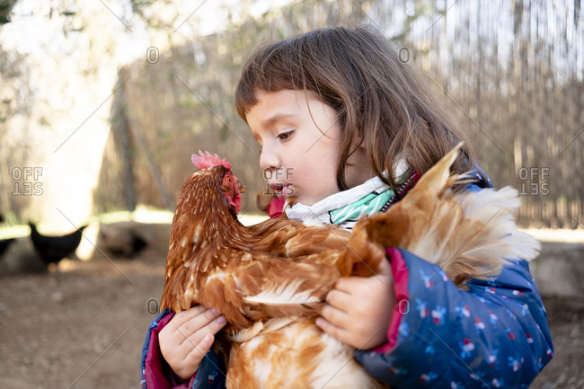 Toddler girl talking to chicken on her arms