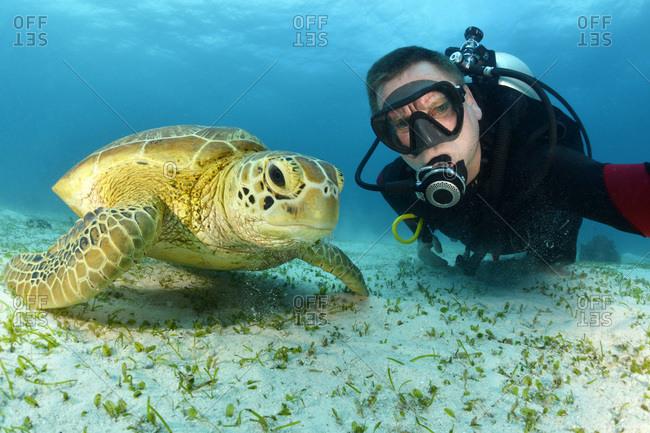 Scuba diver with Green Sea Turtle- Chelonia mydas
