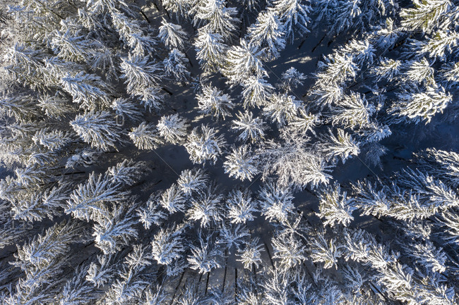 Germany- Upper Bavaria- Dietramaszell- Aerial view of pine forest in winter