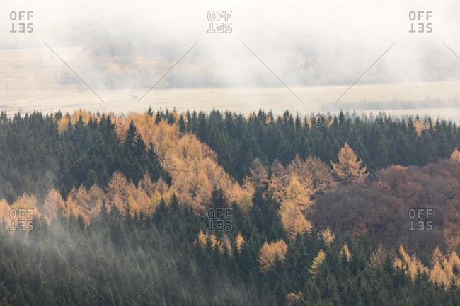 Germany- Hessian Rhoen Nature Park- autumn fog on the Wasserkuppe