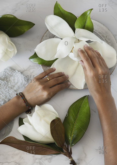 Hands arranging magnolias