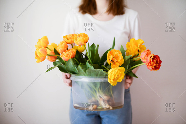 Woman holding bucket with  tulips.