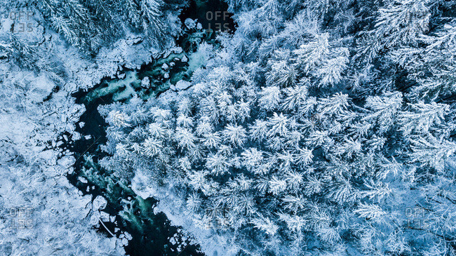 Winter drone aerial of pine trees North Fork River,  North Bend,  WA