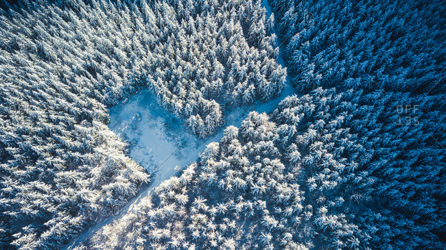 Winter forest aerial photography