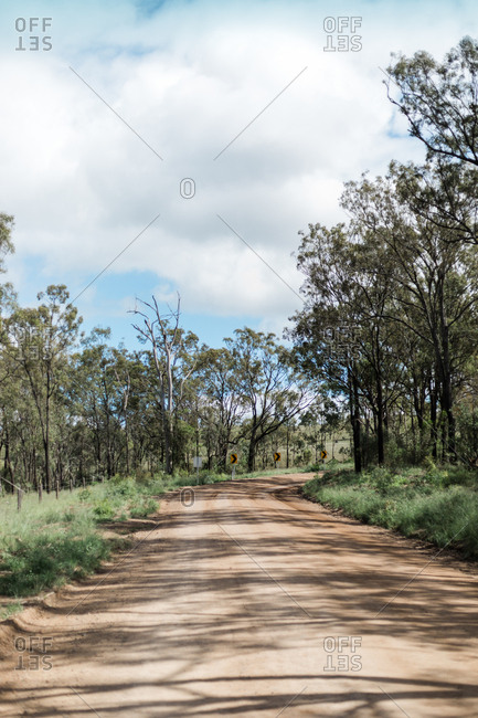 Eucalyptus trees casting shadows along a rural dirt road