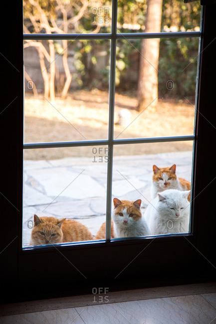 Cats peek through the glass door