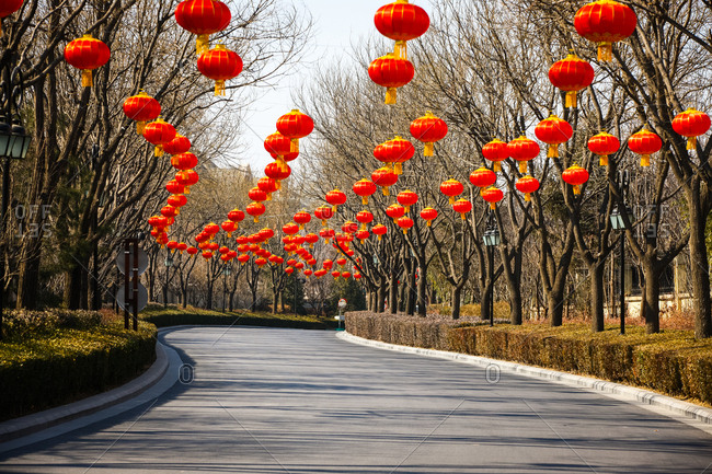 Red lanterns hang from trees