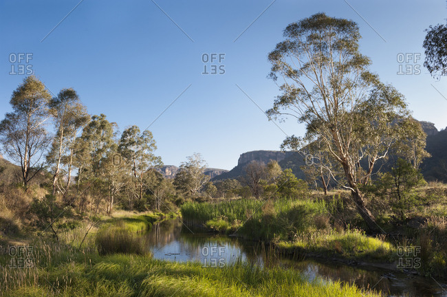 Still stream with wetlands and eucalyptus trees in australia