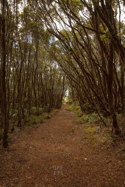 Path in forest, Hawaii