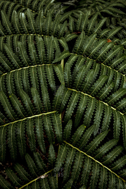 Green ferns growing in the jungle