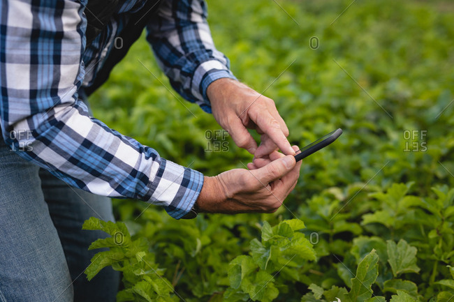 Mid section of senior Caucasian male farmer taking photo of plant at farm