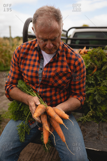 Front view of a senior Caucasian male farmer loading harvested carrots in vehicle on a sunny day
