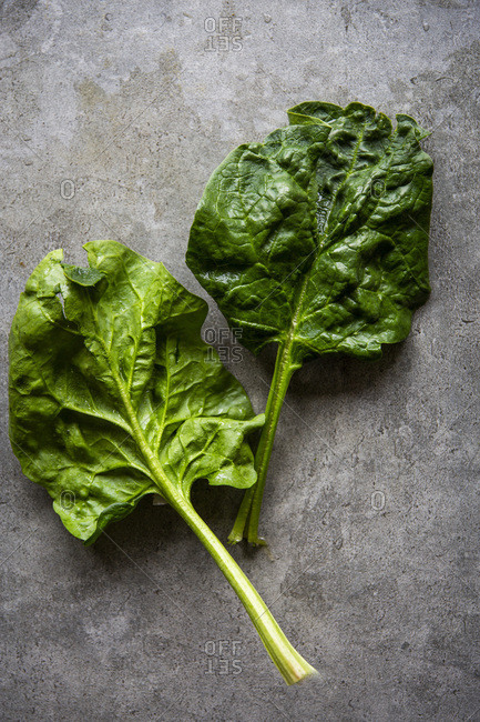 Fresh spinach leaves over grey concrete background with copy space