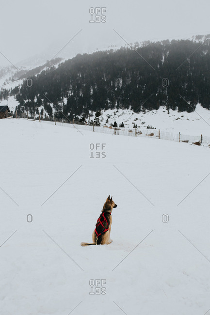 German shepherd sitting on white show in cold winder day in majestic countryside