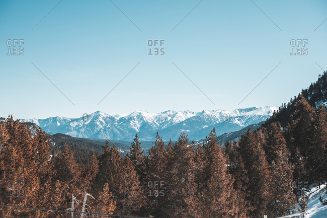 Panorama of high hills with green woods in winter