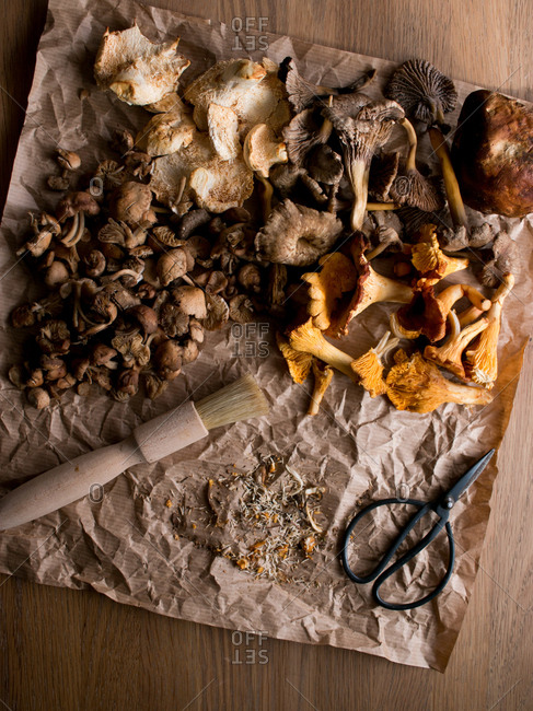 Brush and small scissors placed on wrinkled parchment paper near set of assorted dried mushrooms on wooden table