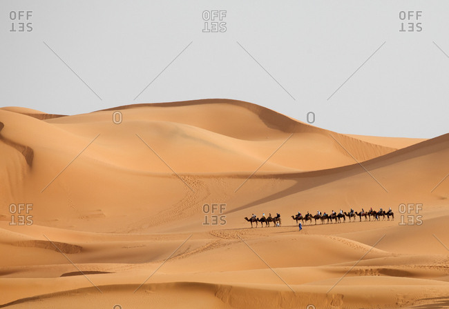 Tourists riding camels through the Erg Chebbi great sand dunes, Merzouga, Morocco