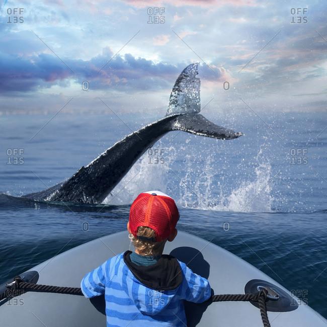 Rear view of little boy watching whale splash in the ocean