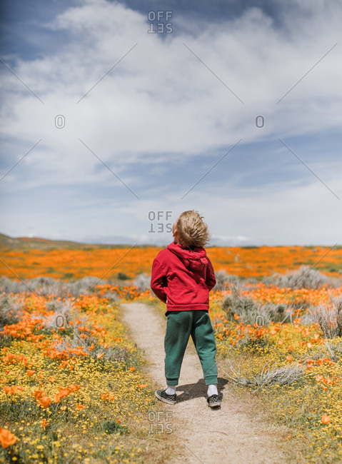 Rear view of a young boy walking in a field of poppies, California