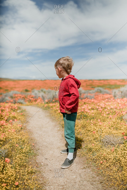 Young boy walking in a field of poppies, California