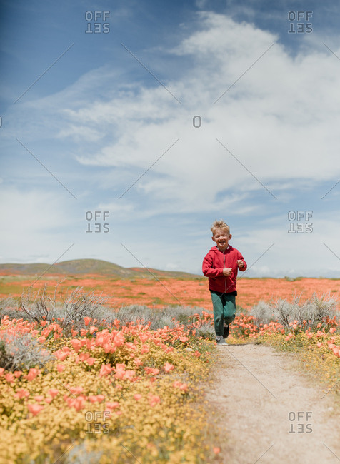 Young boy in a field of poppies, California