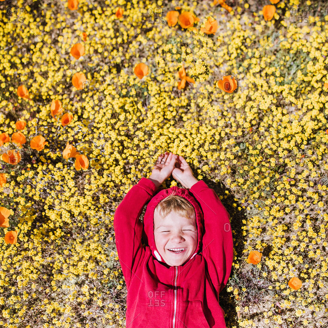 Overhead view of a young boy in a field of poppies, California