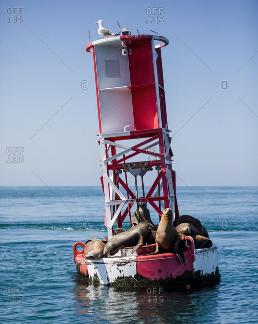 Seals resting on a buoy