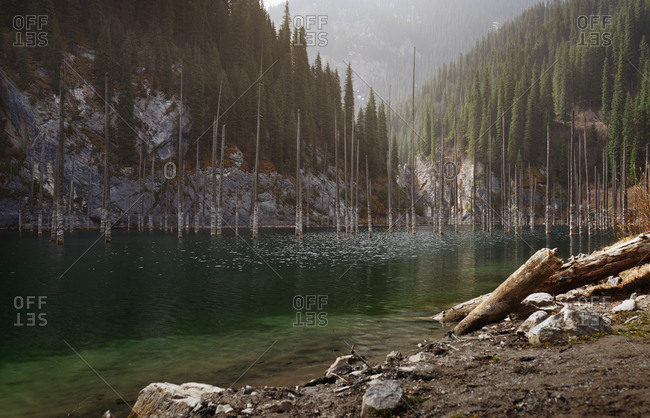 Kaindy mountain lake with submerged tree in the water. Kazakhstan