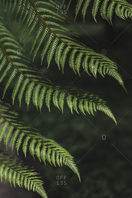 View of the fern leaf
