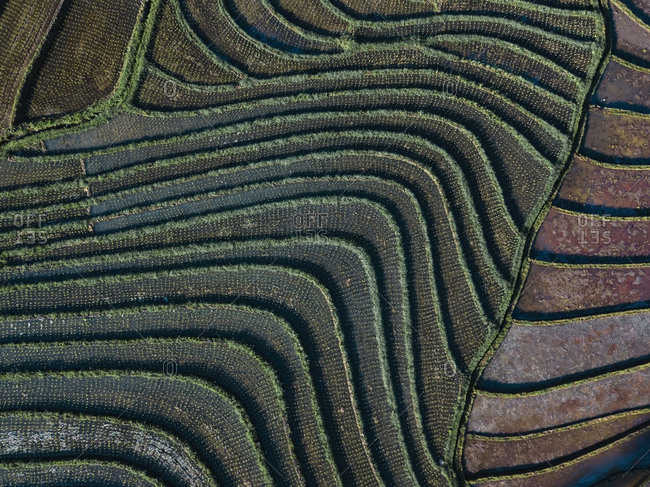 Aerial view of the rice fields