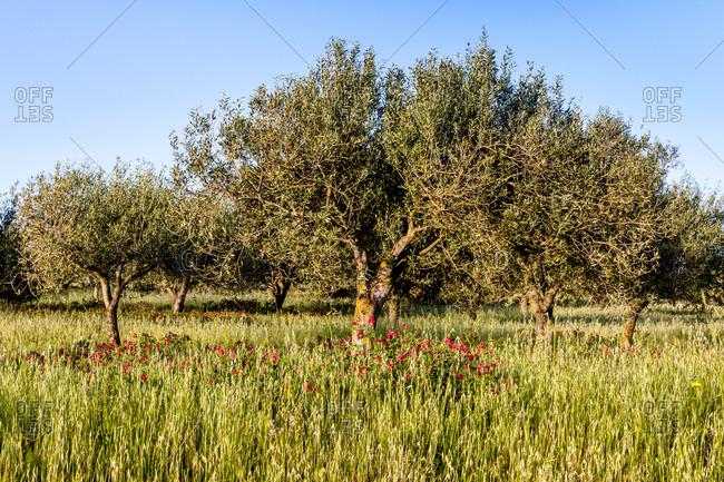 Italy- Sardinia- meadow with trees