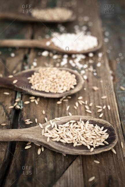 Oats- spelt- barley and buckweath on spoons