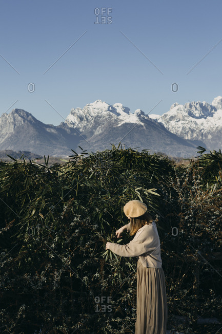Italy- Limana- fashionable woman cutting twigs in garden