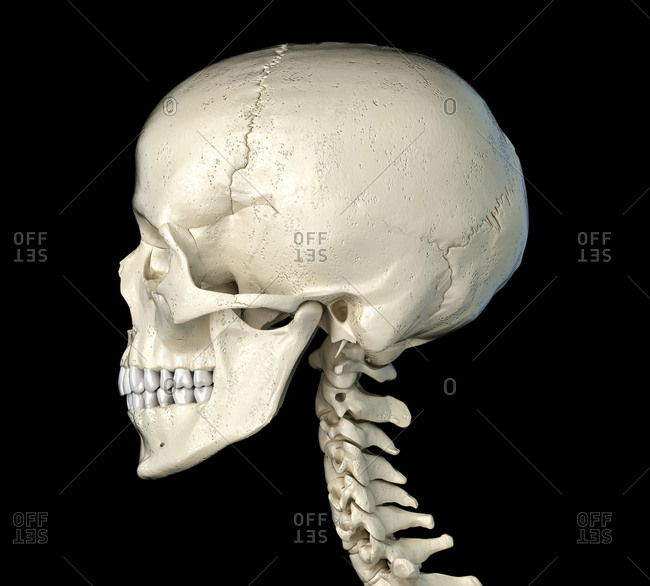 Human skull viewed from a side. On black background.