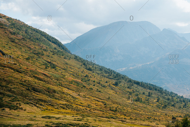 Mountain landscape, details of trees, Pyreenes, Andorra