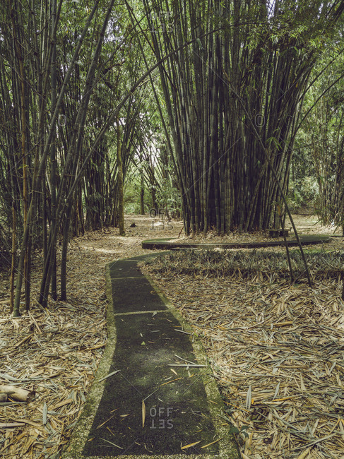 View of the bamboo in the tropical park
