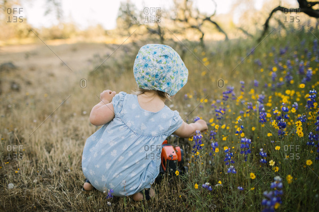 Toddler girl picking wildflowers in a field