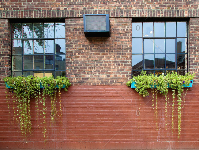 Flower Boxes on a Brick Wall