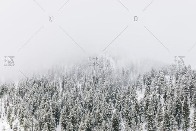 Snow covered mountain and trees near Sun Valley, Idaho